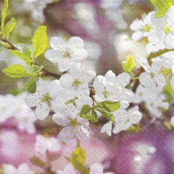 Serviette - Blossoming Cherry Branch (33x33cm)