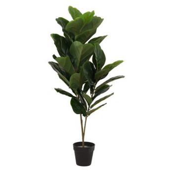 Liddle Leaf Fig Tree (90cm)