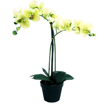 Glory Green Artificial Orchid - 55cm