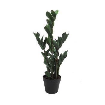Green Artificial Zamico Plant - 65cm