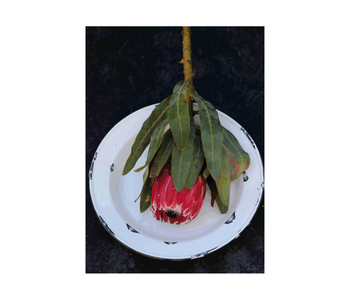 Protea on enamel dish design