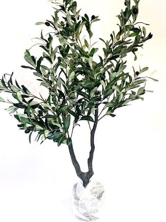 Olive Tree 1.1m