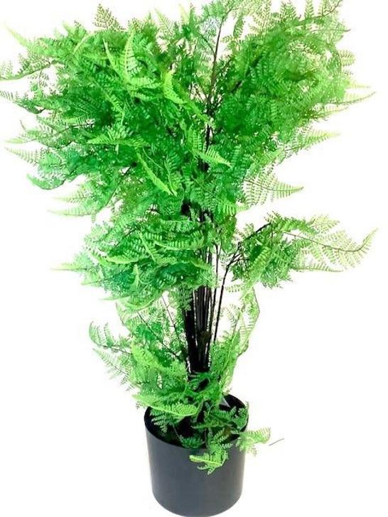 Tree - Lady In Red Fern 1m