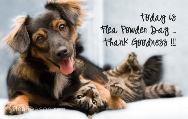 flea-powder-day-dog-cat.jpg