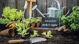 organic-farming.jpeg