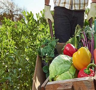 sustainable-food.jpg