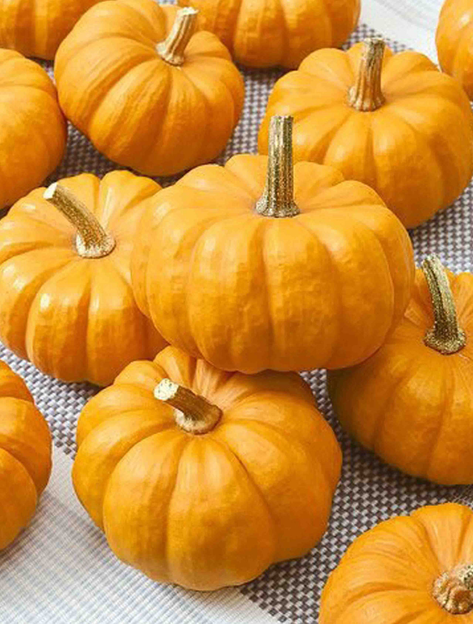 Jack Be Little Vegetable Seeds Heirloom select QTY very small Pumpkin