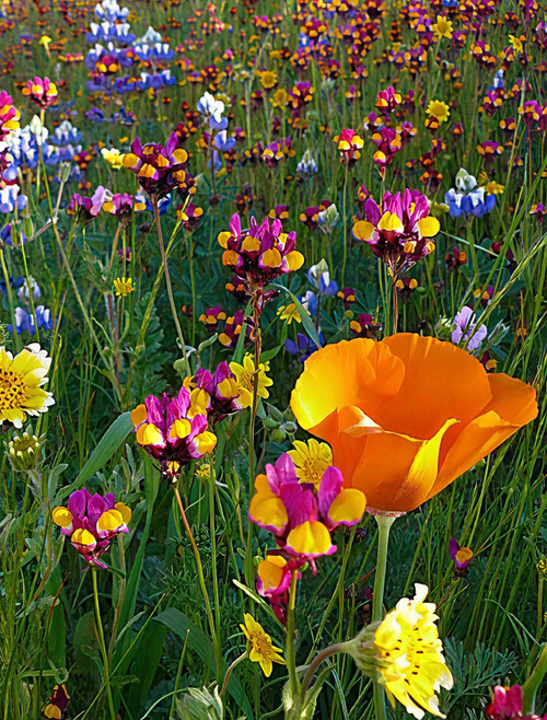 Flower Seeds/Wildflower Mixtures