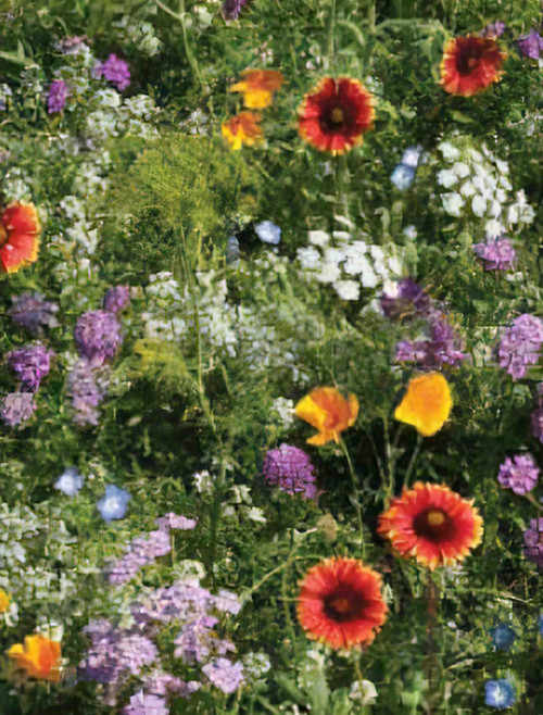 Beneficial Insectary Mix Seed