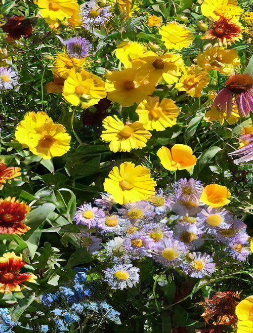 Low Grow Seed Mix