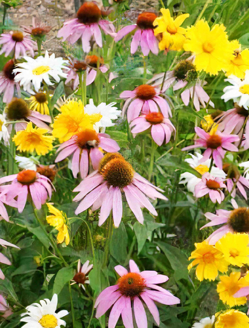 Partial Shade Seed Mix