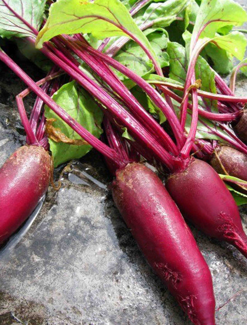 Vegetable Seeds/Beets