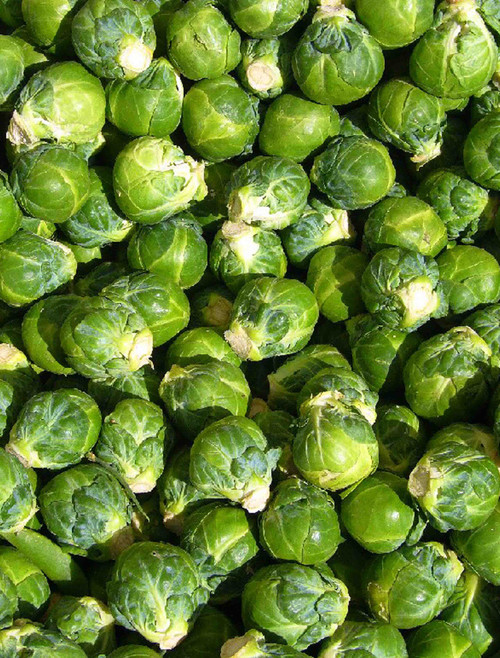 Long Island Improved Brussel Sprout Seed