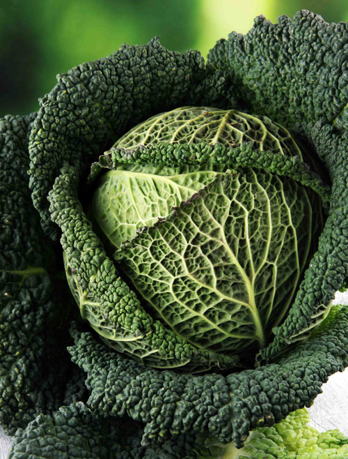 Savoy Cabbage Seed