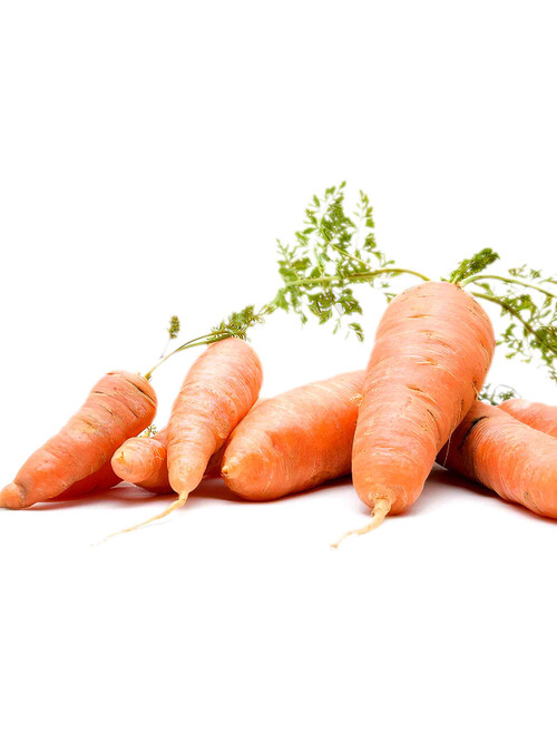 Chantenay Red Cored Carrot Seed