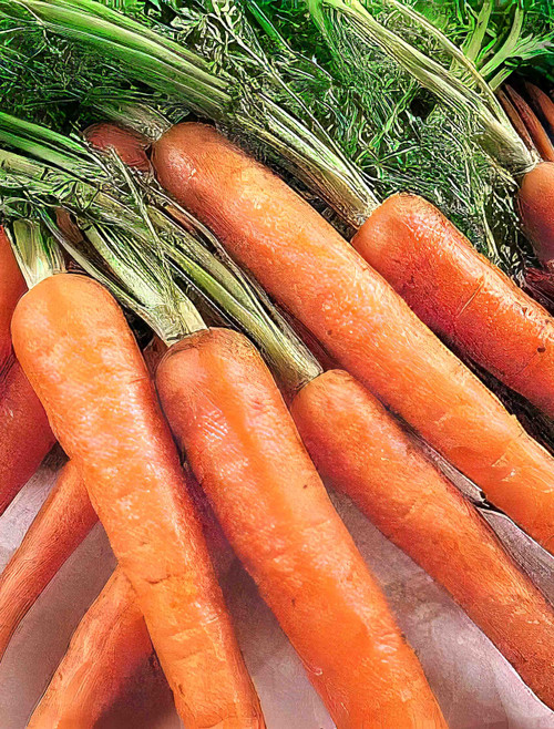 Vegetable Seeds/Carrot