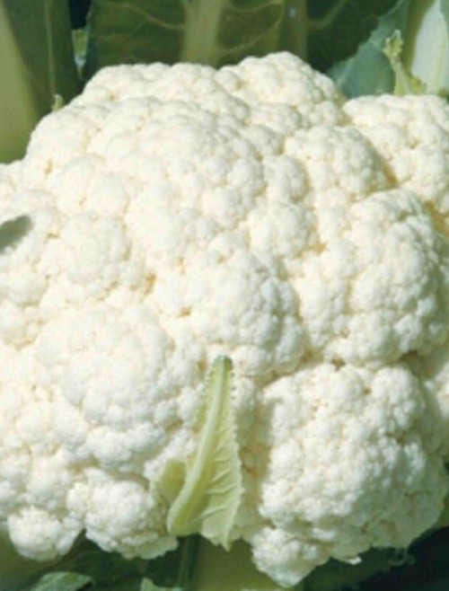 Snowball Y Improved Cauliflower Seed