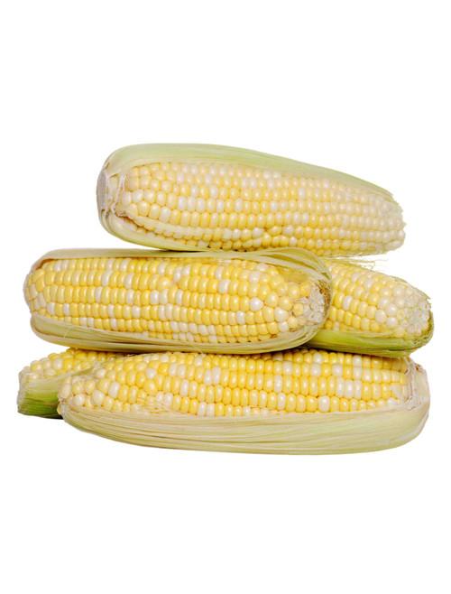 Bi-Licious (F1 Bicolor) Corn Seed