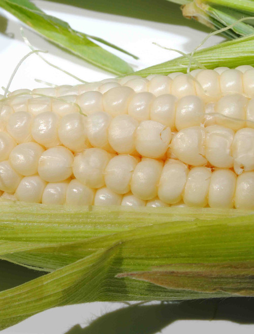 Silver Queen (F1 White) Corn Seed