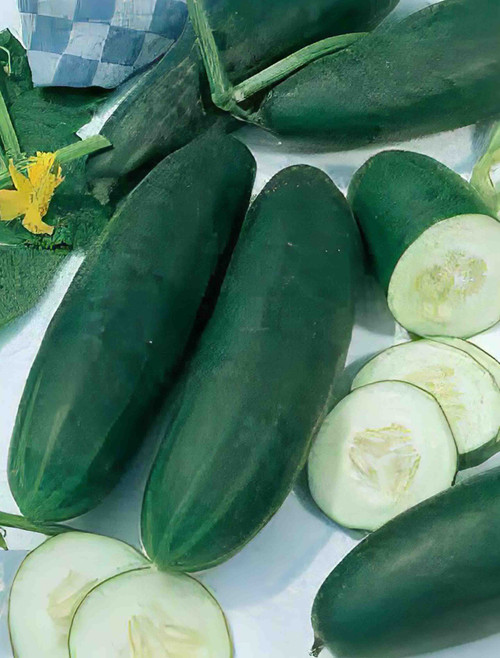 Vegetable Seeds/Cucumber/Slicing