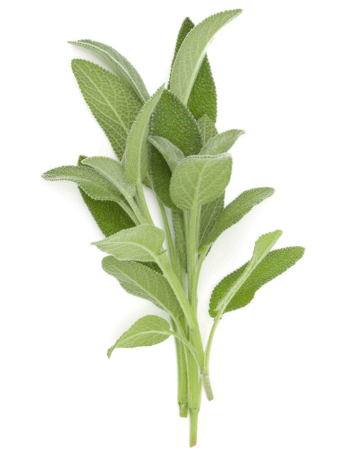Sage, Broad Leaf Herb Seed