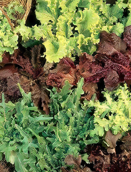 Vegetable Seeds/Lettuce/Blends