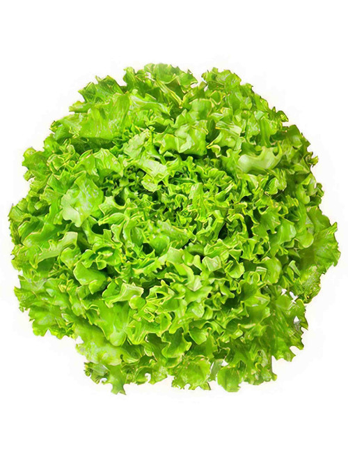 Tango Leaf Lettuce Heirloom Seed