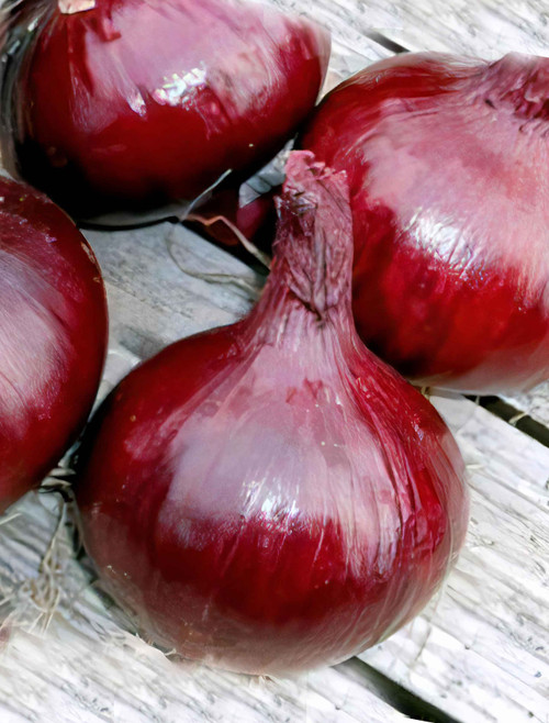 Ruby Red Long Day Onion Heirloom Seed