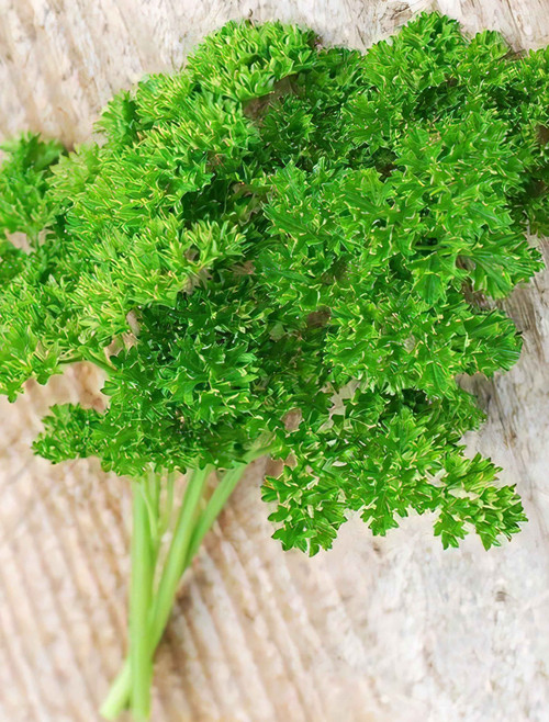 Forest Green Parsley Heirloom Seed