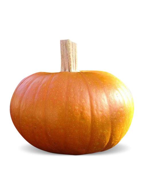 Small Sugar Pumpkin Heirloom Seed