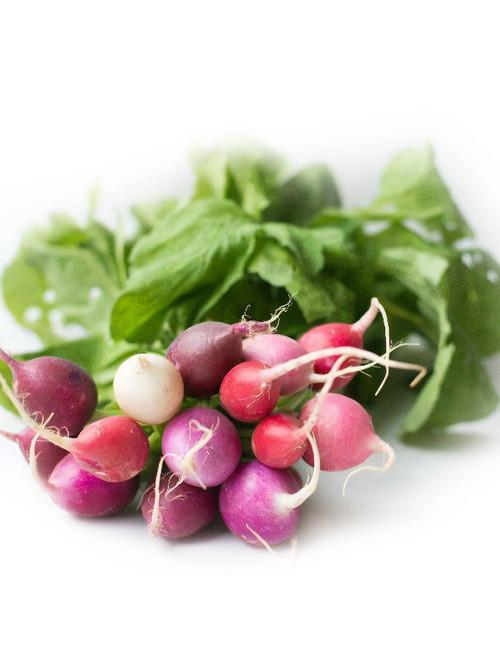 Vegetable Seeds/Radish