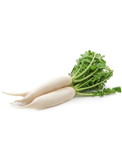 Japanese Minowase (Daikon) Radish Heirloom Seed