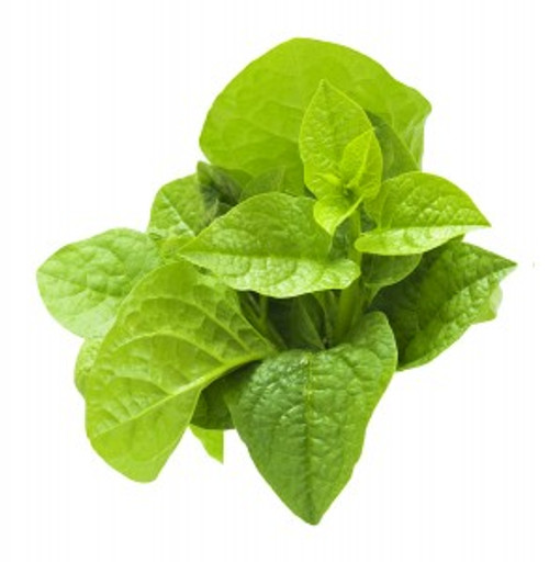 New Zealand Spinach Heirloom Seed
