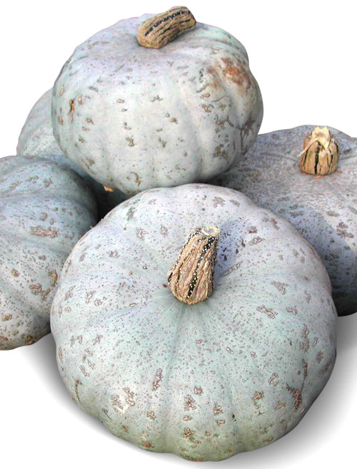 Sweet Meat Winter Squash Heirloom Seed