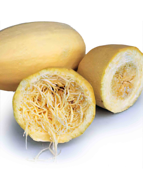 Vegetable Spaghetti Winter Squash Heirloom Seed