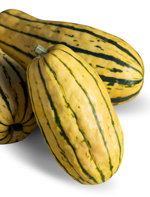 Delicata Winter Squash Heirloom Seed