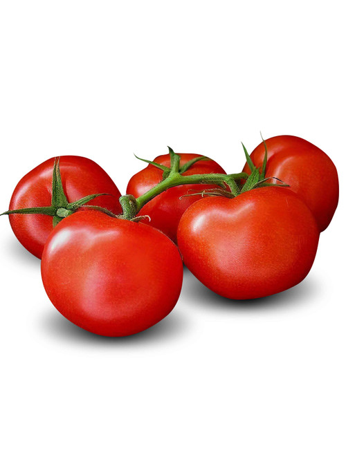 Ace 55 Tomato Heirloom Seed