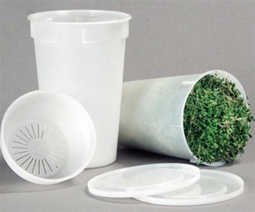 Vegetable Seeds/Asparagus