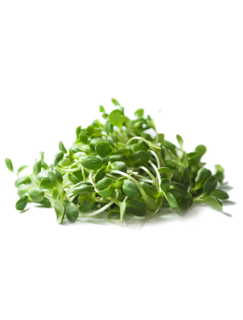 Sunflower Sprouting & Microgreen Mix - One Pound