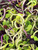 ON SALE!;Microgreens;Sprouting Seeds/Sprouting Seed Mixes