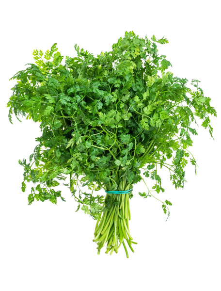Chervil, Curled Herb Seed
