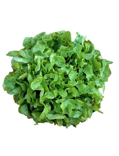 Vegetable Seeds/Lettuce/Leaf
