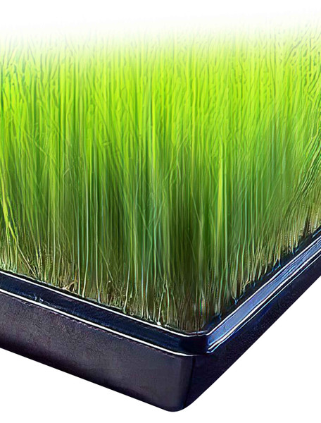 """10 Pack of Black Plastic Wheatgrass Growing Trays (with holes) 21"""" x 11"""" x 2"""""""