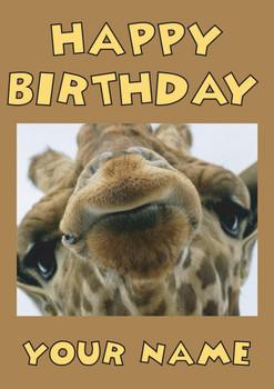 Giraffe Close Up Birthday Card