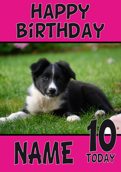 Border Collie Puppy Dogs And Puppies Happy Birthday