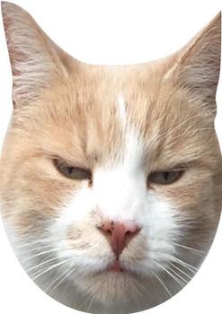 Wilbur The WONDER CAT-  Fancy Dress Cardboard Celebrity Cat Face Mask