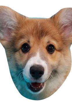 Corgi Pup Cut Out Celebrity Face Mask