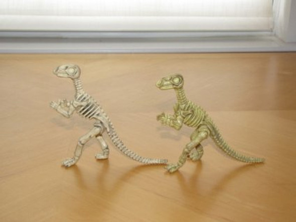 "Large Dinosaur Skeleton Fossils 5-6"" 9128"