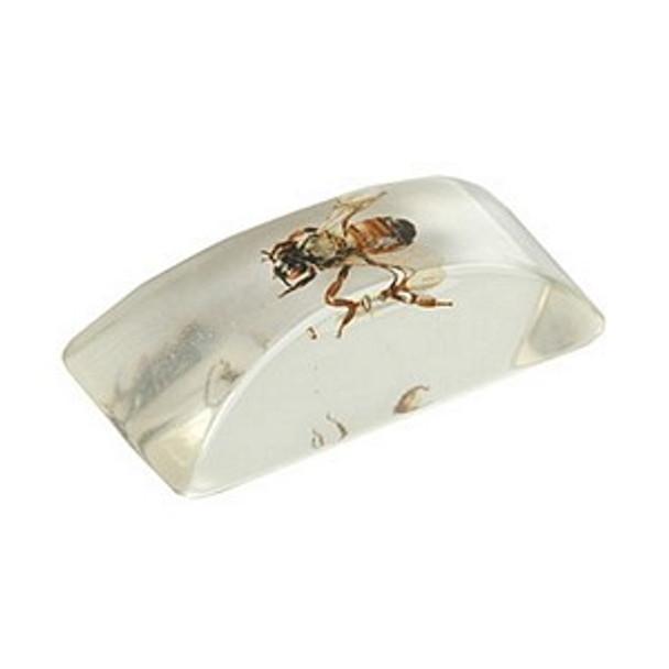 Bug Ice Cube 9016