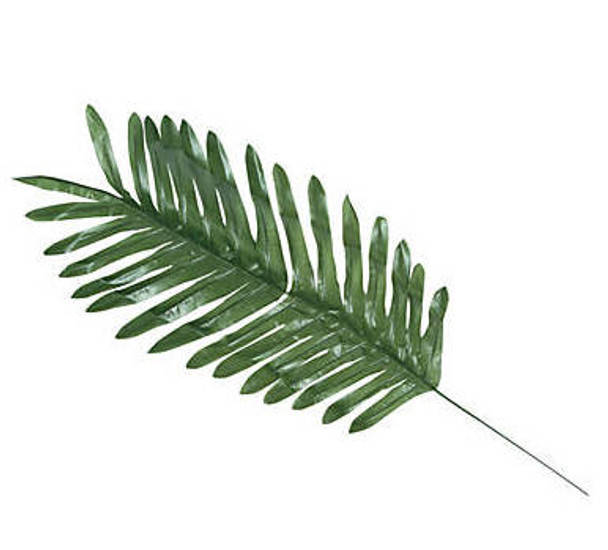Palm Leaves Luau Tropical Party Decorations LARGE 12 PACK 3904D